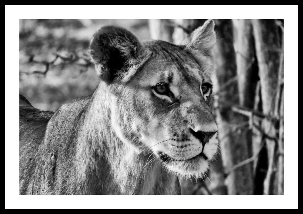 Memoria per Botswana: la magia del bianco e nero